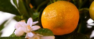 Best Fertilizer For Citrus Trees In Containers