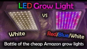 Can You Use Regular LED Lights for Grow Lights