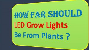 How-Far-Should-LED-Grow-Lights-Be-From-Plants