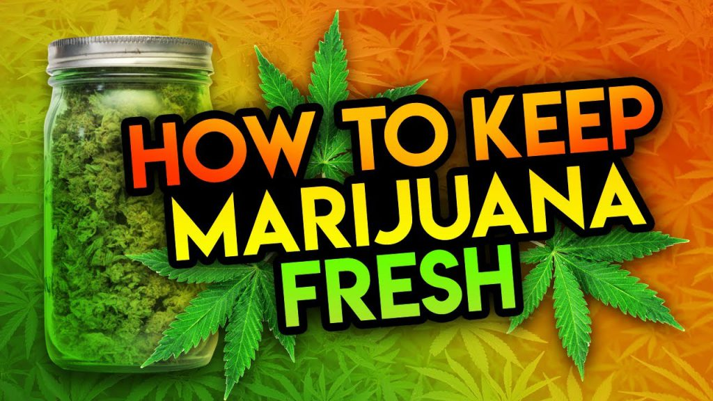 Best Way to Keep Marijuana Fresh 2