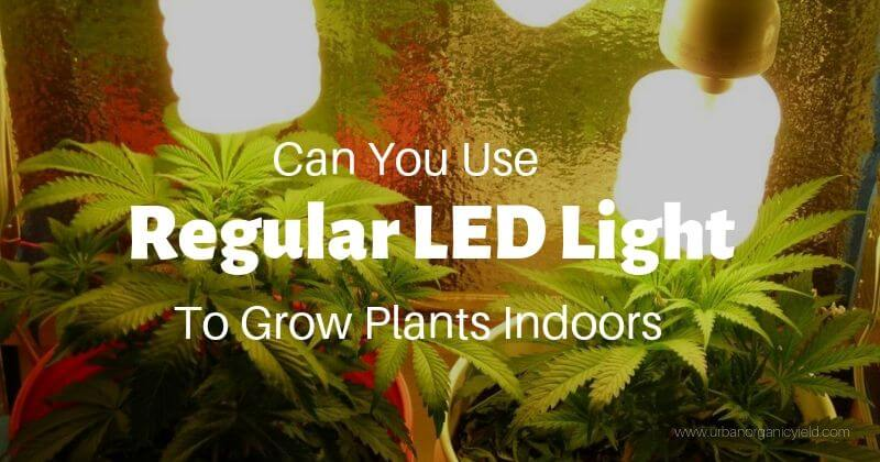 Can-You-Use-Regular-LED-Light-Bulbs-To-Grow-Plants-Indoors