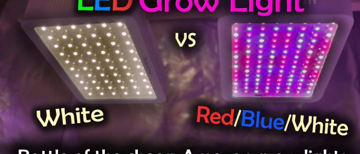 Can You Use Regular LED Lights for Grow Lights?